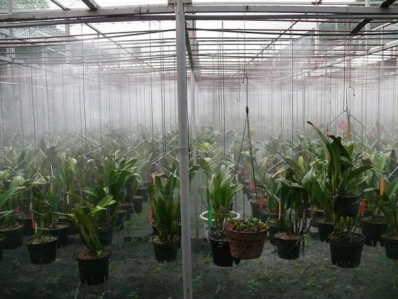 máy phun sương cho lan