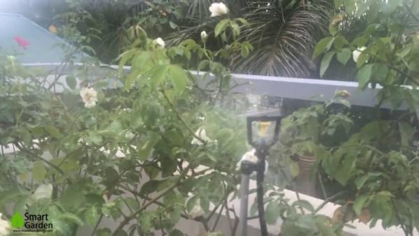 Béc phun sương tưới cây hoa hồng